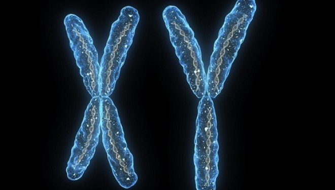 Genetic 'Adam' and 'Eve' uncovered – Fox News