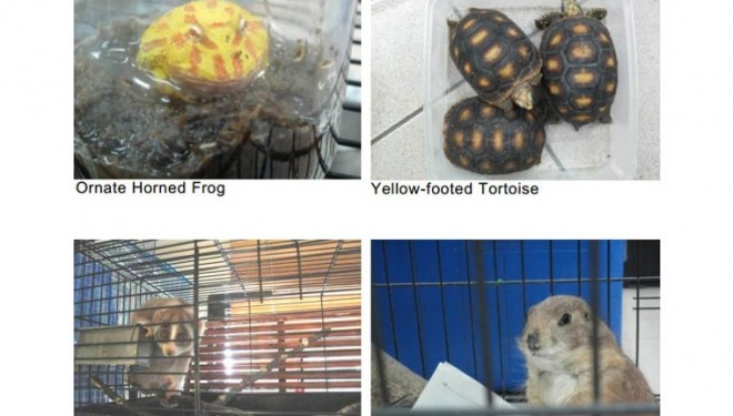 Man fined record amount for illegal wildlife possession – Channel News Asia