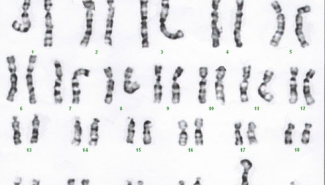 Where Did The Y Chromosome Come From? – Asian Scientist Magazine